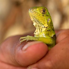 Little reptiles
