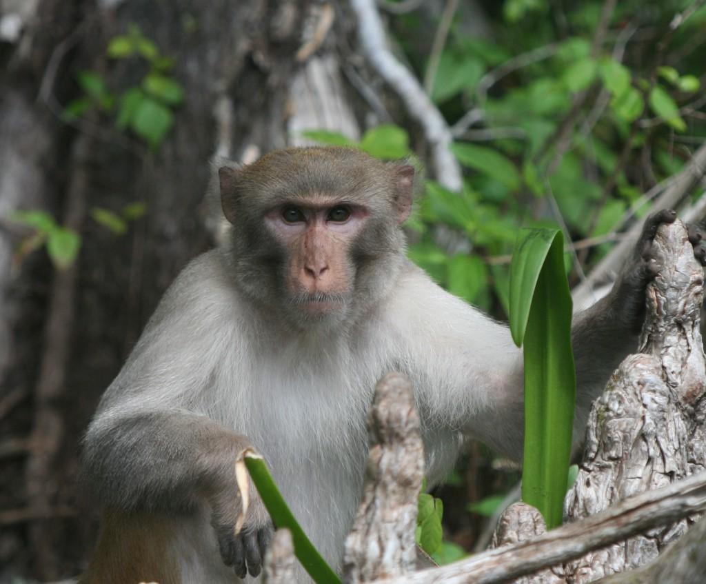 Silver Springs - Monkeys