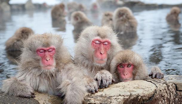 Japan Hotspring