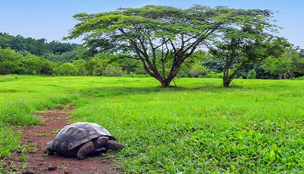 Ecotourism in Galapagos