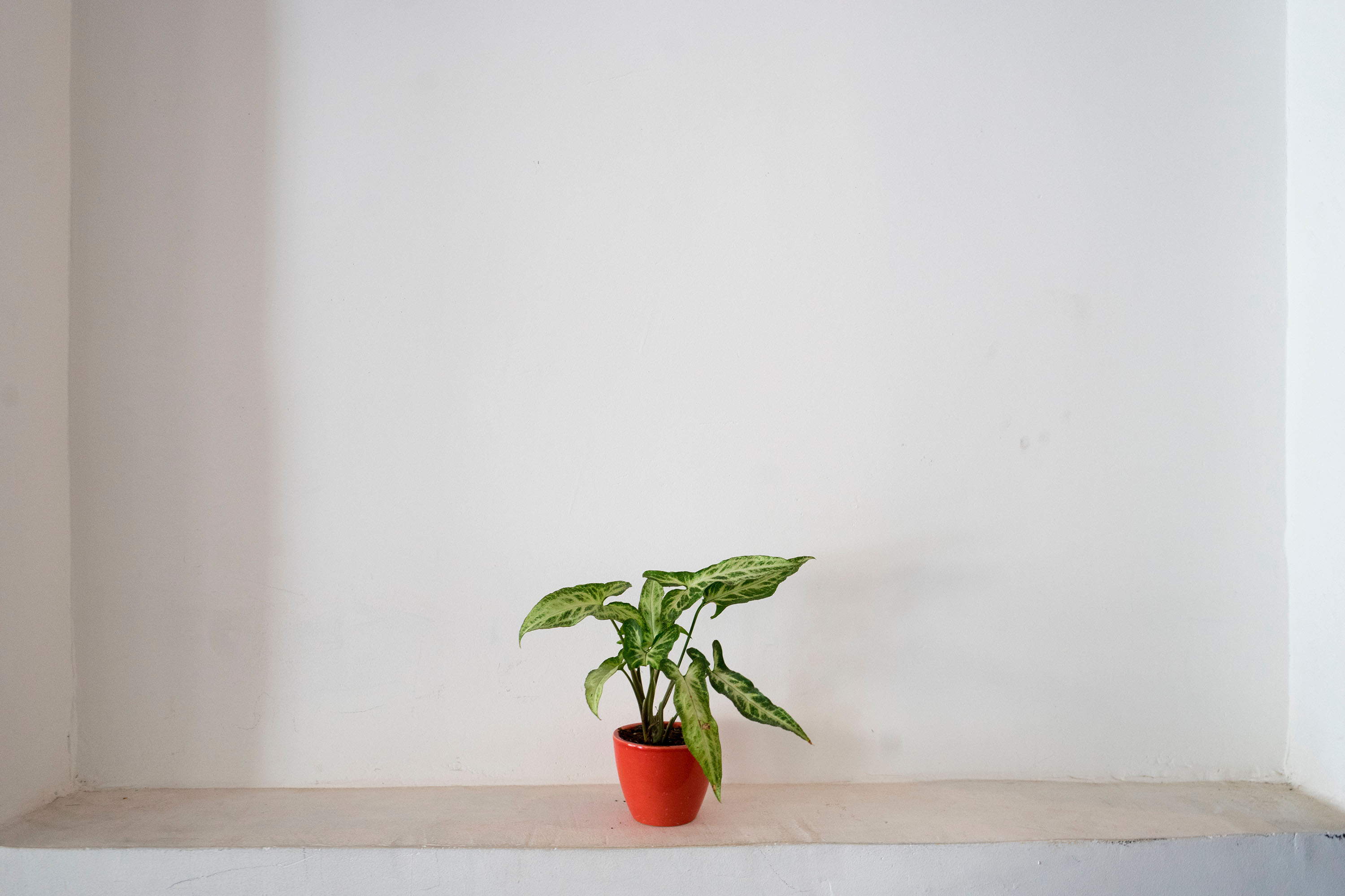 Tales From The Safe – The Pot Plant That Moved An Office