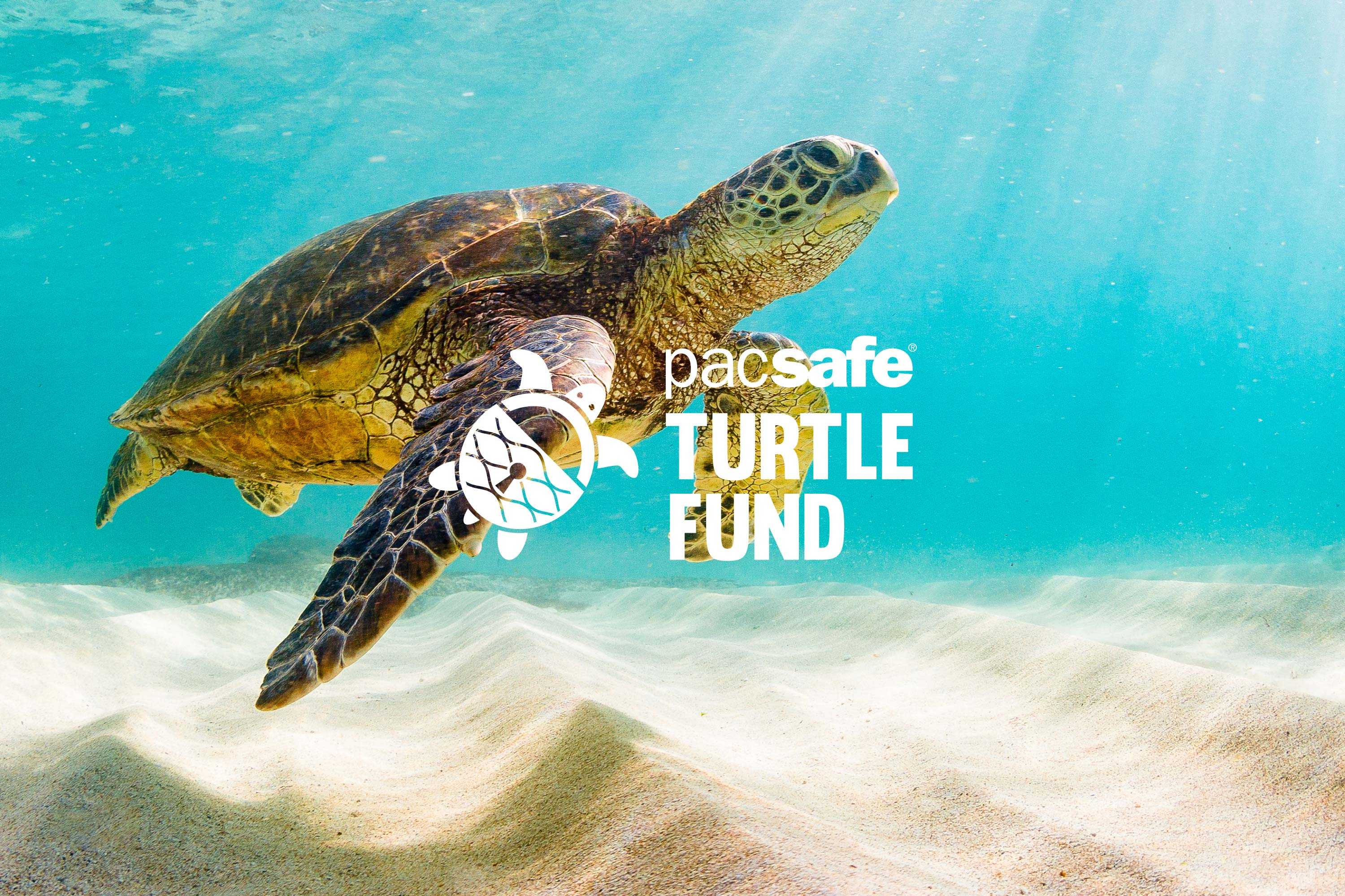A Big 2018 For Pacsafe's Turtle Fund
