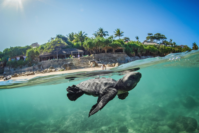 World's Best Eco Resorts